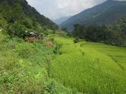 Nepal 201645