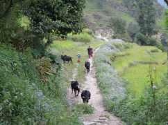 Nepal 201654