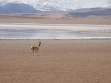 Bolivia South America 2009 b2283