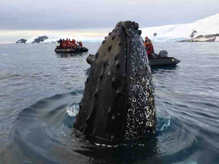 Our amazing friendly whale