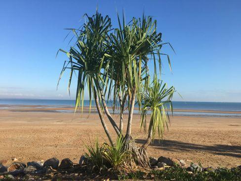 Northern Territory 2017 IMG_7923 1