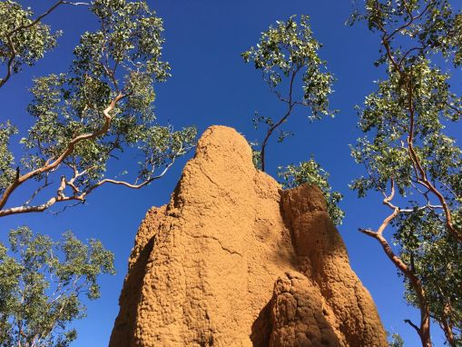 Northern Territory 2017 IMG_8112 1
